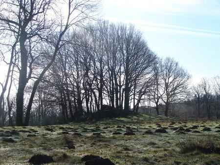 Nos mystérieuses forêts françaises