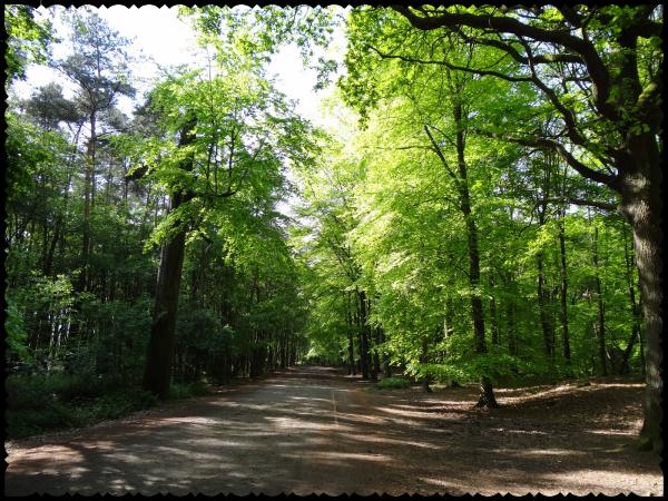 Les mystères du Bois de Stambruges (Belgique)