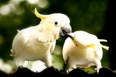Comme 2 oiseaux libre