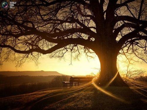 J'ai constaté que La solitude est ce qu'il y a de plus reposant pour le c½ur. Il y a dans la solitude une volonté de fuir les mauvaises fréquentations.