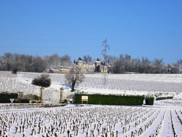 vignes d'hiver