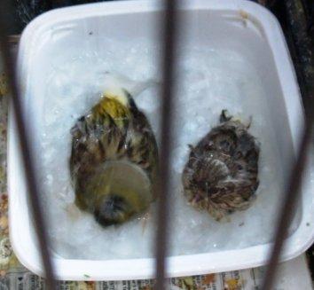 premier bain de mes bébés gloster