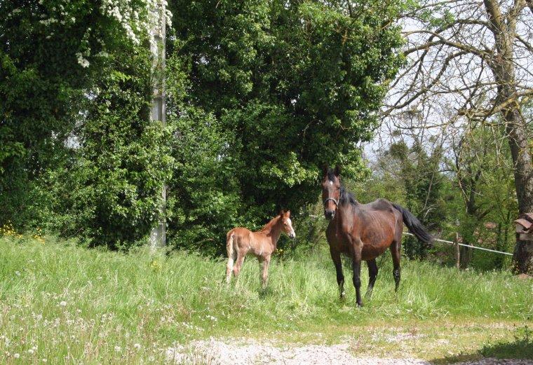 Promenade à la ferme