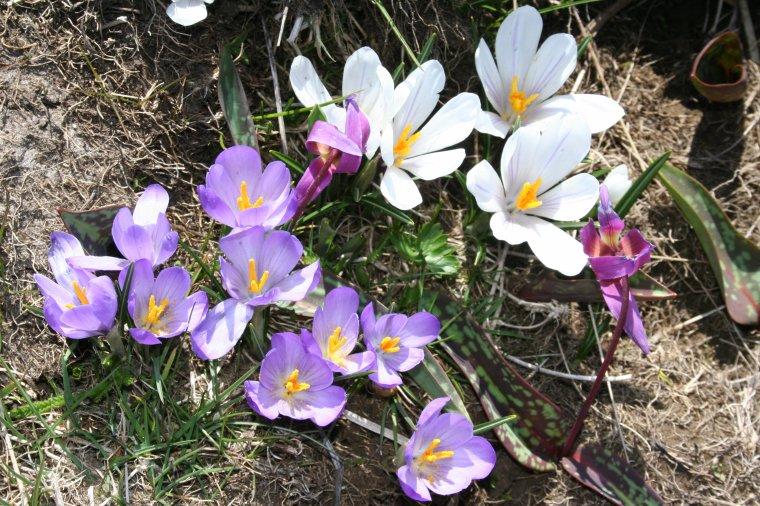 Les crêtes de Fond d'Urle au printemps