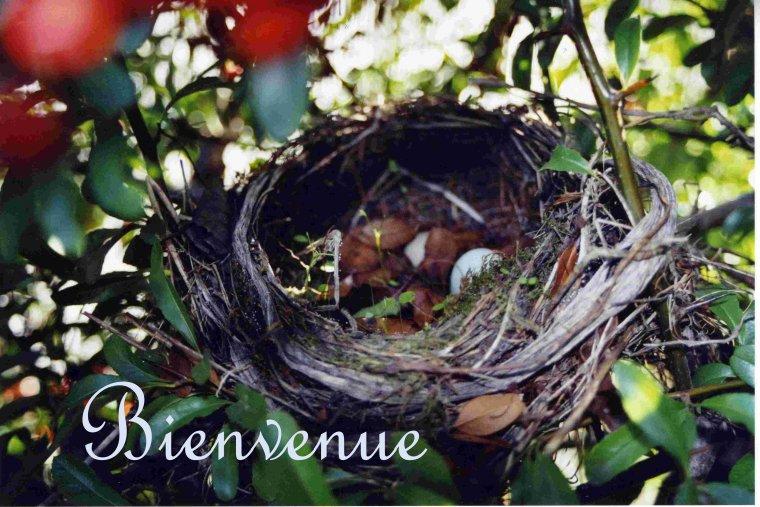 La douce saison des nids