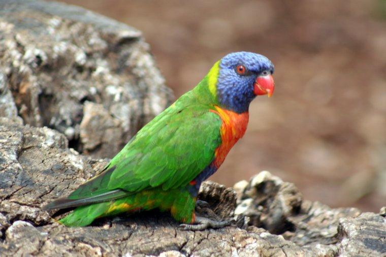 Le Parc des Oiseaux - Villard les Dombes