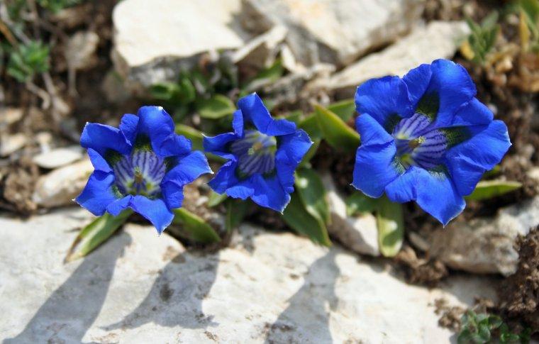 Le Vercors au printemps