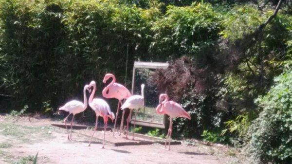 Sortie au zoo cette aprem avec la classe petite section maternelle