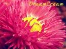 Photo de DreamCream