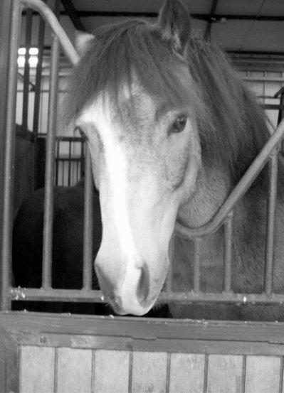 SONDAGE PRINCIPAL : Quels poneys/chevaux les plus polyvalents et maniables ?