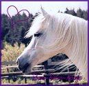 Photo de Bon-heur-horse