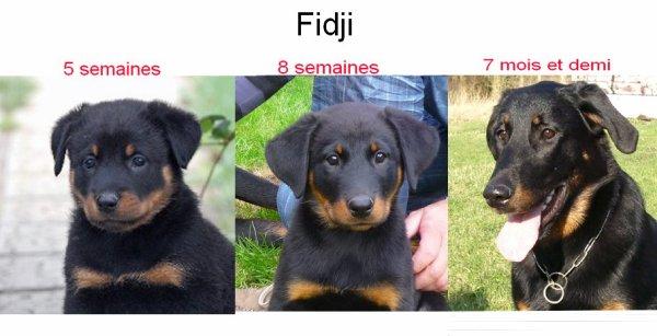 Fidji- quel changement