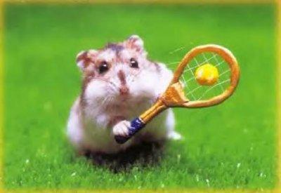 hamster qui fait du sport