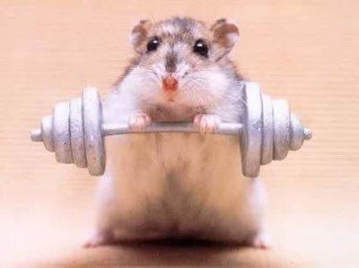 hamster qui porte des alteres