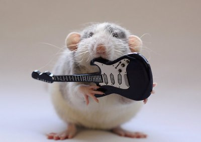 hamster qui fait de la guitare