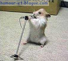 hamster qui chante et l autre fait du golf