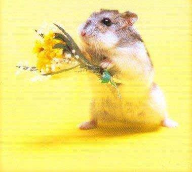il offre un bouquet de fleure
