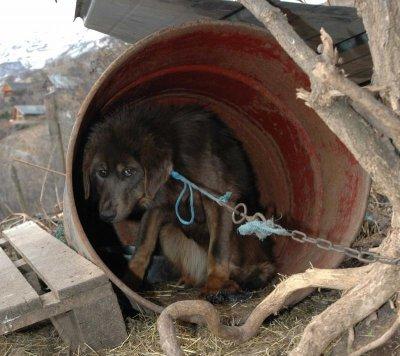 Animaux    61 chiens et 3 ânesses sauvés de l'enfer