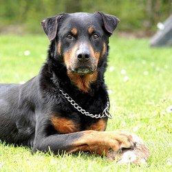 La garde de ses filles ou la vie de son chien, il devra choisir