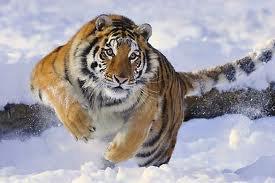 Trop mignon dans la neige