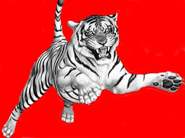 Féroce le tigre