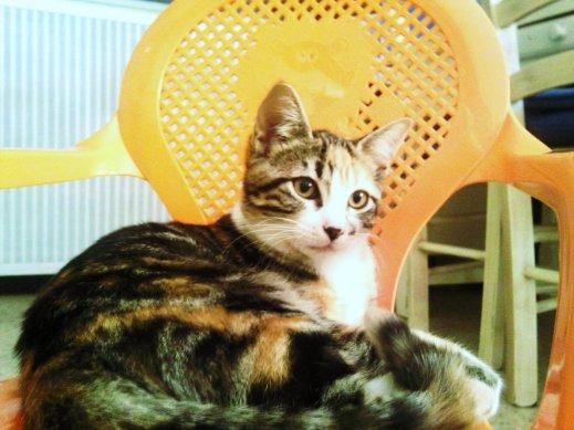 Mon chat, mon AMOUR de champignon.