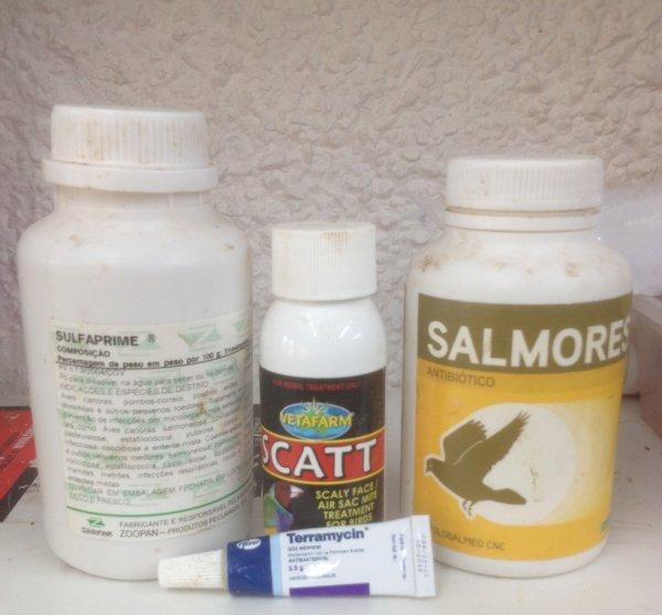 Some bird room essentials..