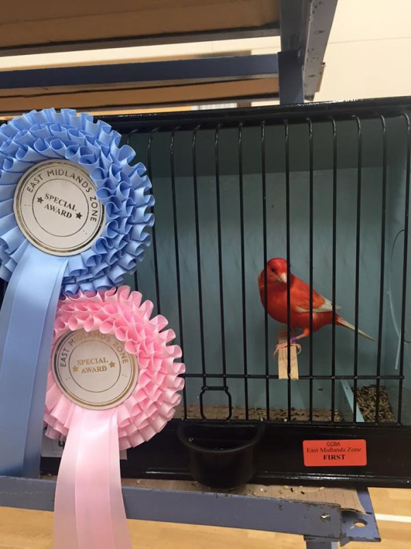 Best Novice Lipochrome (Intensive Clear Red) East Midlands Zone show 2015
