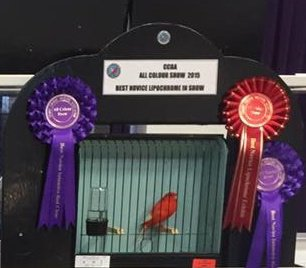 All Colour Show 2015 my results.