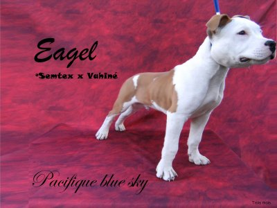 """""""Eagel"""" Pacifique blue sky . 3 mois."""