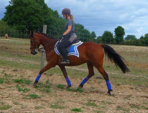 Hello bande de horseman ! :)