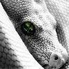 paul-drakes