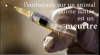 STOP-EuthanasieAnimale