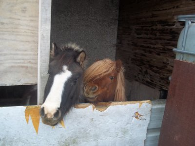 Ces petits poneys me feront toujours rêvé ! ♥