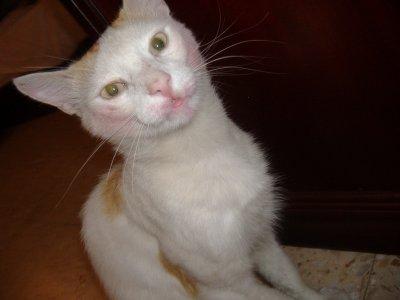 Un chat maquillé