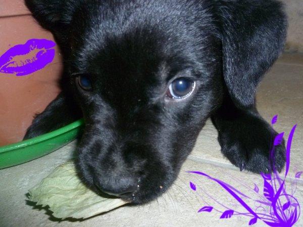 Faustine a 2 mois :)