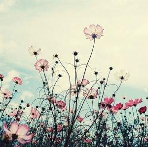 La vie ne vaut rien mais rien ne vaut la vie.