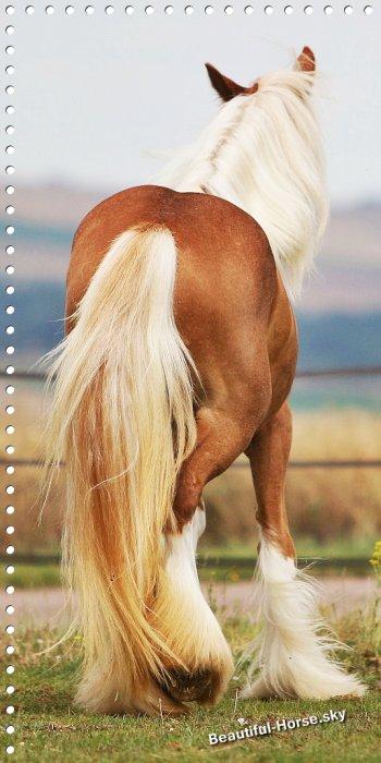 Blog de beautiful-horse