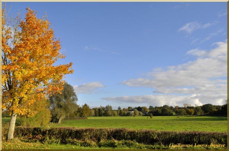 Toujours de l'automne...