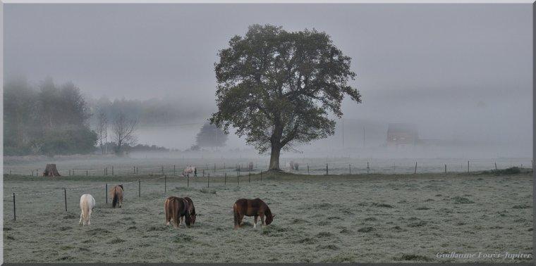 Et tant de printemps... mais aussi du froid brumeux !