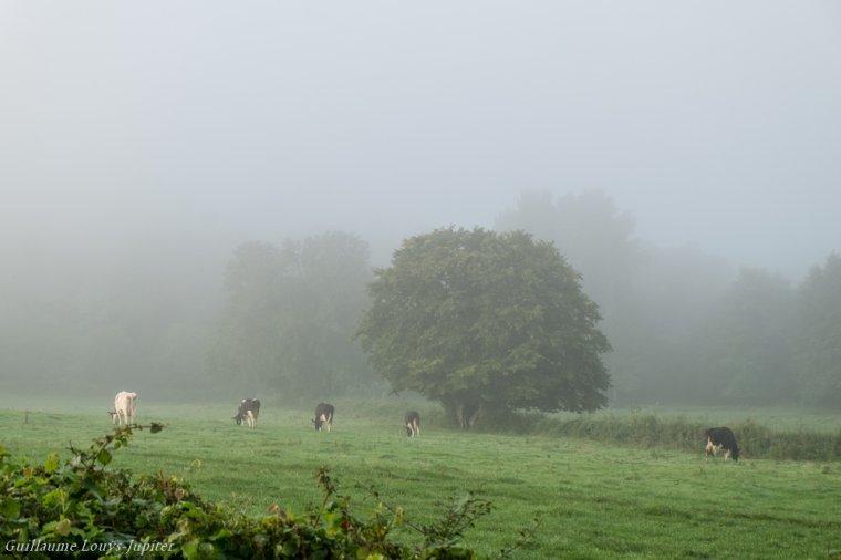 Brouillard de rentrée