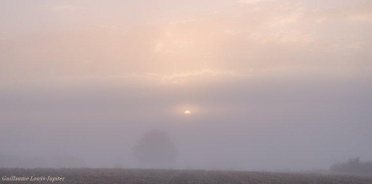 Brouillard d'automne bien installé