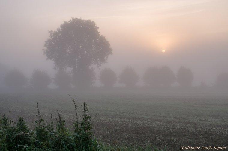 Cycle brouillardeux