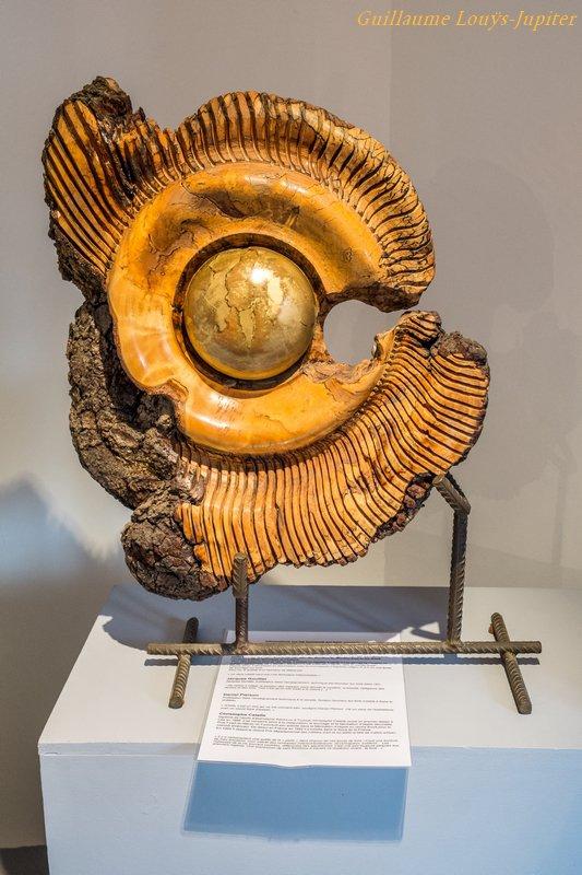 Felleries, le Musée des Bois Jolis