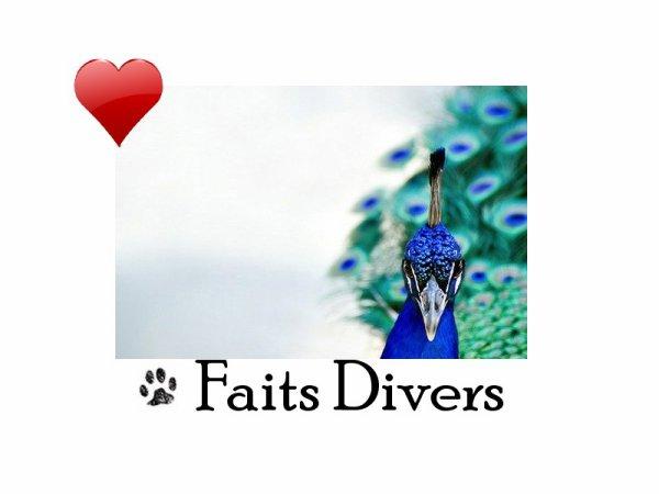 ღFait Divers on Louval30.sky' ©