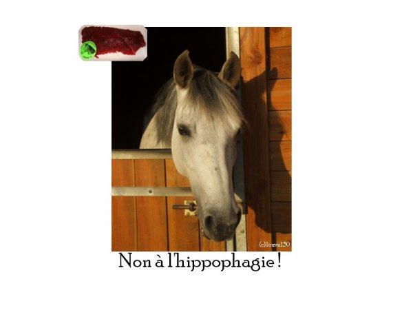 ღNon à l'hippophagie ! on Louval30.sky' ©