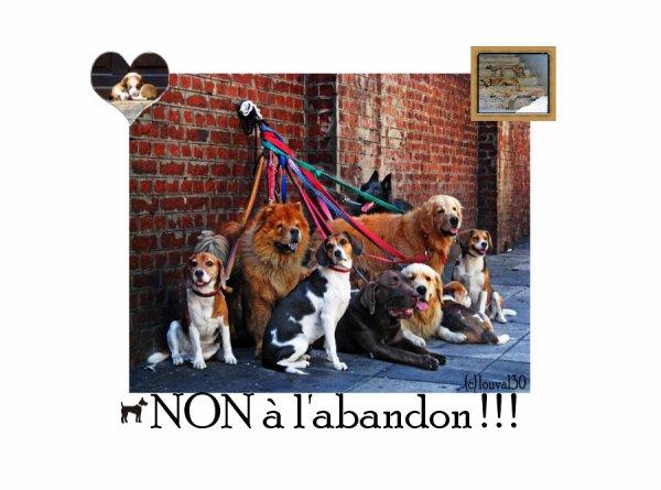 ღNon a l'abandon ! on Louval30.sky' ©