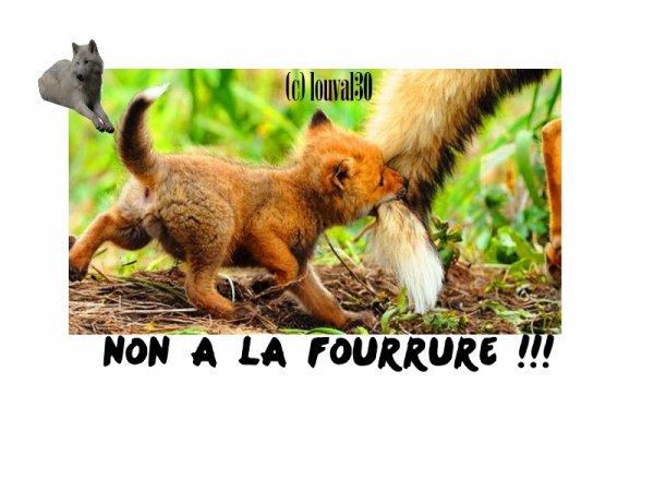 ღNon à la fourrure !!! on Louval30.sky' ©