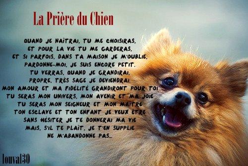 ღLes Prières de nos animaux de compagnie on Louval30.sky' ©