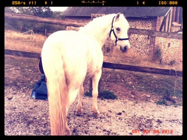 Depuis que je suis devenue sa cavaliére , sa a tout changé ... ♥